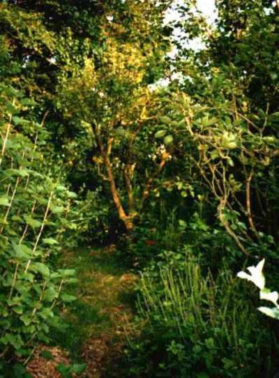 Forestgarden2
