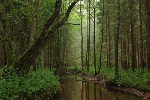 Tarvasjõgi